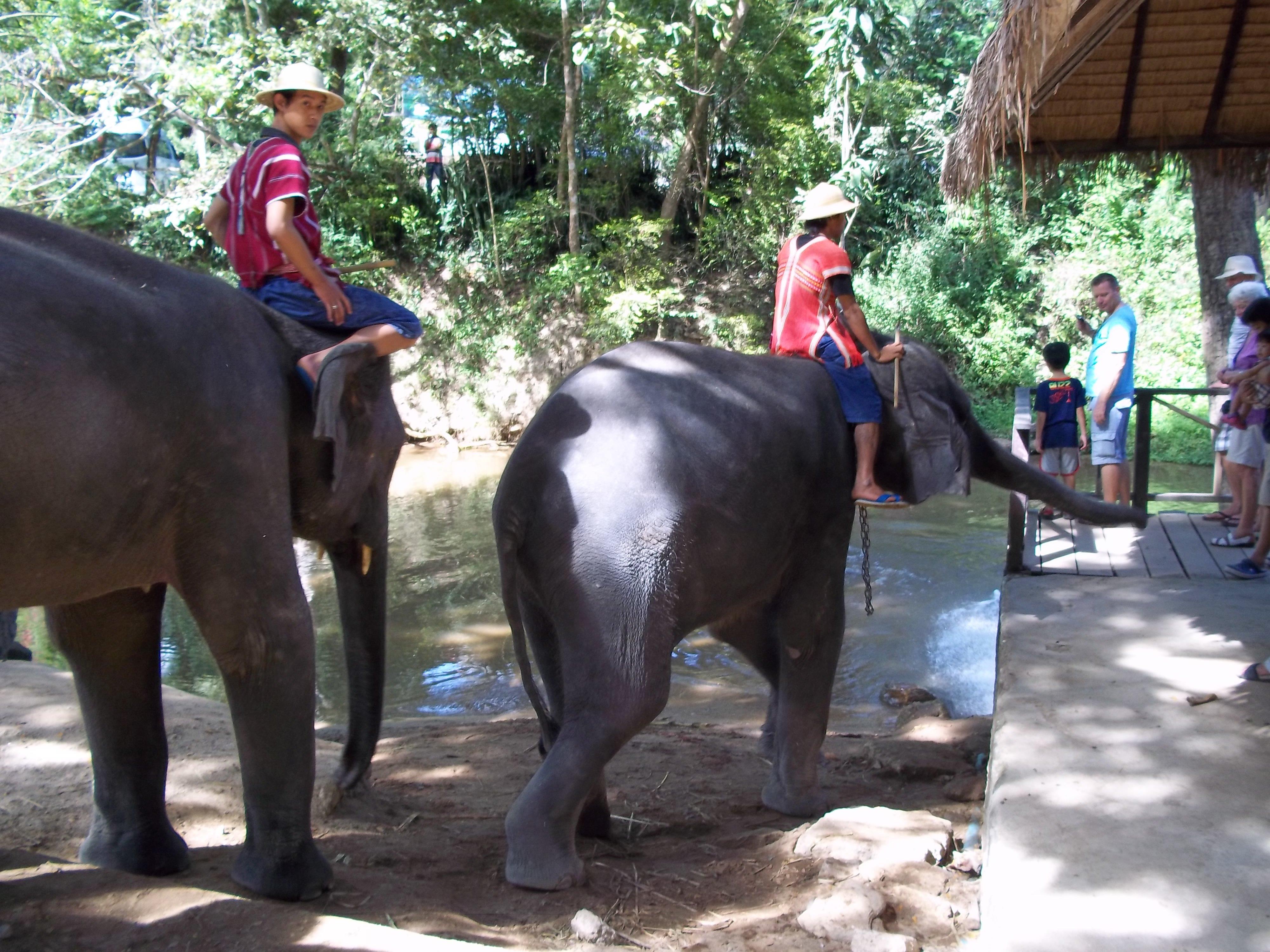 Maesa Elephant Camp near Chiang Mai