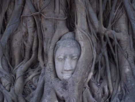 Buddha head in Bodhi tree in Ayutthaya