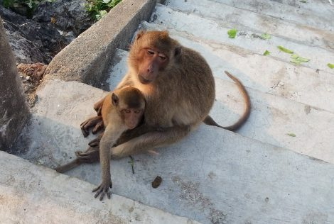 Monkeys at Lopburi Monkey Temple