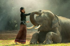 Surin is famous for its elephants