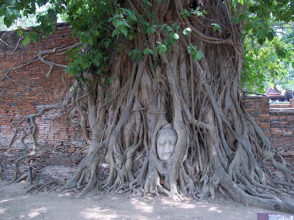 Wat Phra Maha Tat in Ayutthaya
