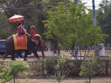 Elephant ride around Ayutthaya Historical Park