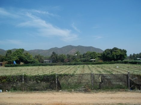 View from the train from Bangkok to Kanchanaburi